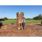 Sawing / Planking an English Oak Tree