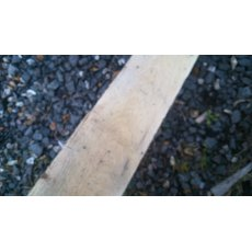 Green Oak Board 2400mm x 100mm x 25mm